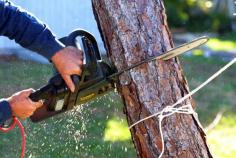Tree removals Melbourne