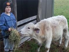 Dusodie Holiday Farm - Activities