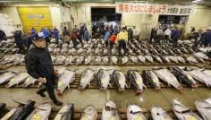 Image result for south korean seafood supply